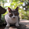 Catdsc_3213