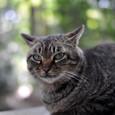 Catdsc_3245