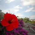 Haibisukasudsc_5479
