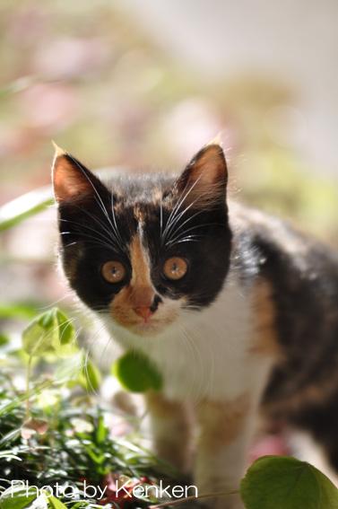 Catdsc_0877n