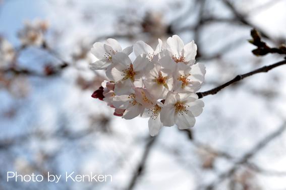 Sakuradsc_4591_n_2