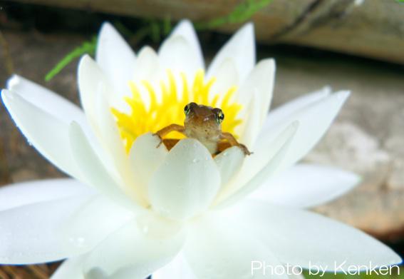 Frogp1090415n