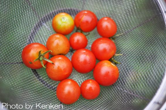 Tomatodsc_1563_n