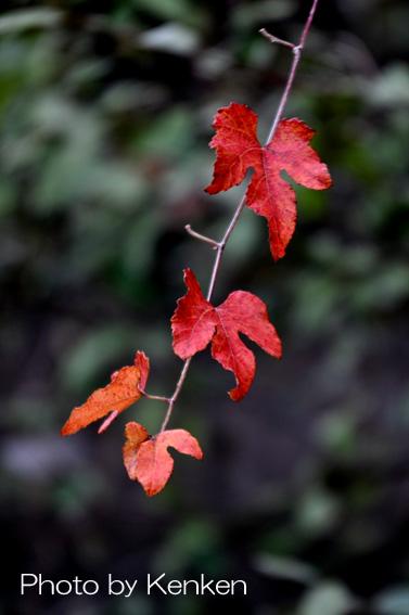 Leaf126n